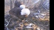 DECORAH EAGLES  4/17/2015  7:44 AM  CDT   DAD BRINGS TW0 VERY FRESH FISH