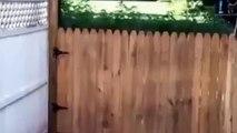 Cet homme est particulièrement fier de la clôture qu'il vient tout juste d'achever. Mais regardez bien ce chien. MDR !