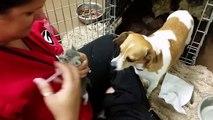Une maman chien adopte des bébés chats orphelins