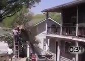 Compilation de bucherons pas futés - attention chute d'arbres
