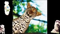 Best Jokes To Read Animal Compilation Wild Animals Videos Funny Jokes Video Com