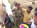 Cops play Holi with injured police horse Shaktimaan