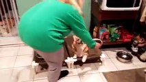 These Corgis show off table manners