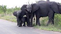 Trop mignon, ce bébé éléphant découvre sa trompe