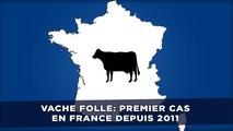 Vache folle: Un premier cas décelé en France depuis 2011