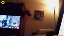 FUNNY VIDEOS- Funny Cats - Funny Cat Videos - Funny Animals - Fail Compilation - Cats Fails