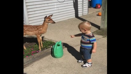 Baby Has Playdate With Baby Deer