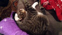 Cat Sleeps In Weirdest Position
