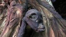 2nd Dead Alien body found at UFO sightings hot spot Russia 2011