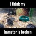Hamster cassé. Trop marrant