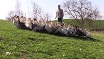 """La Région aide la filière """"aval"""" de l'élevage de canards gras du Gers"""