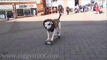 Dog Skating and Tricks