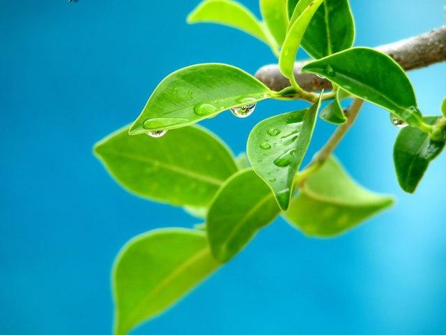 Qué significa soñar con hojas - Sueño Significado