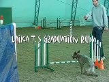 Laika runs agility