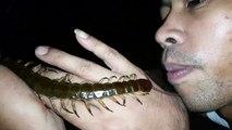 Gros centipède en Thaïlande
