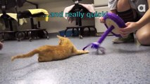 Cat Born With Deformed Legs Learns To Walk