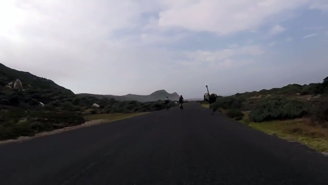 Cyclists chased by an ostrich. The funniest thing you'll see today..