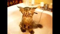 Funny Crazy Cats Playing in Water & Taking Baths - Funny Kitty Cats, Funny Pets, Funniest Animals