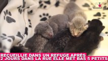 Recueillie dans un refuge après 2 jours dans la rue, elle met bas 5 petits ! Tout de suite dans la minute chat #172