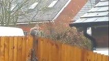 Brave Squirrel desperately tries to fight through Storm Katie