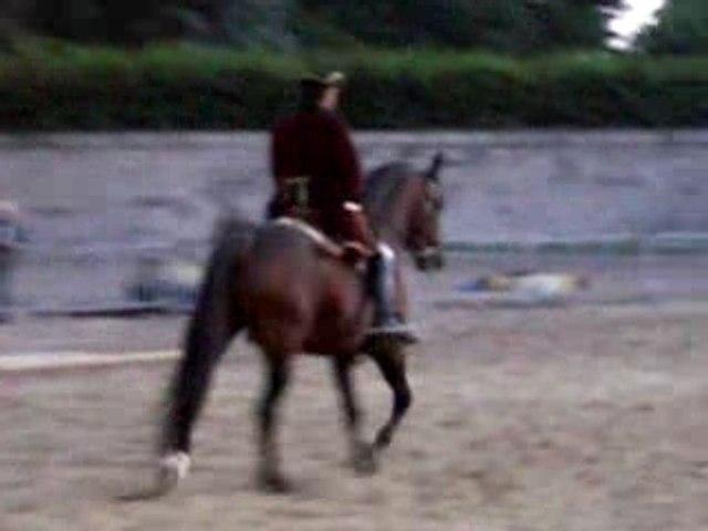 Nuit du cheval portugais