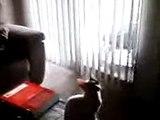 Legolas and Arwen (kitties)