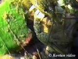 © Узкопалый речной рак Astacus leptodactylus ⁄⁄ Danube crayfish, Galician crayfish