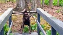 Funny Animal Videos  funny video clips  funniest videos  humor videos