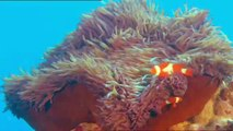 Voyages sous les mers 3D - Bande Annonce