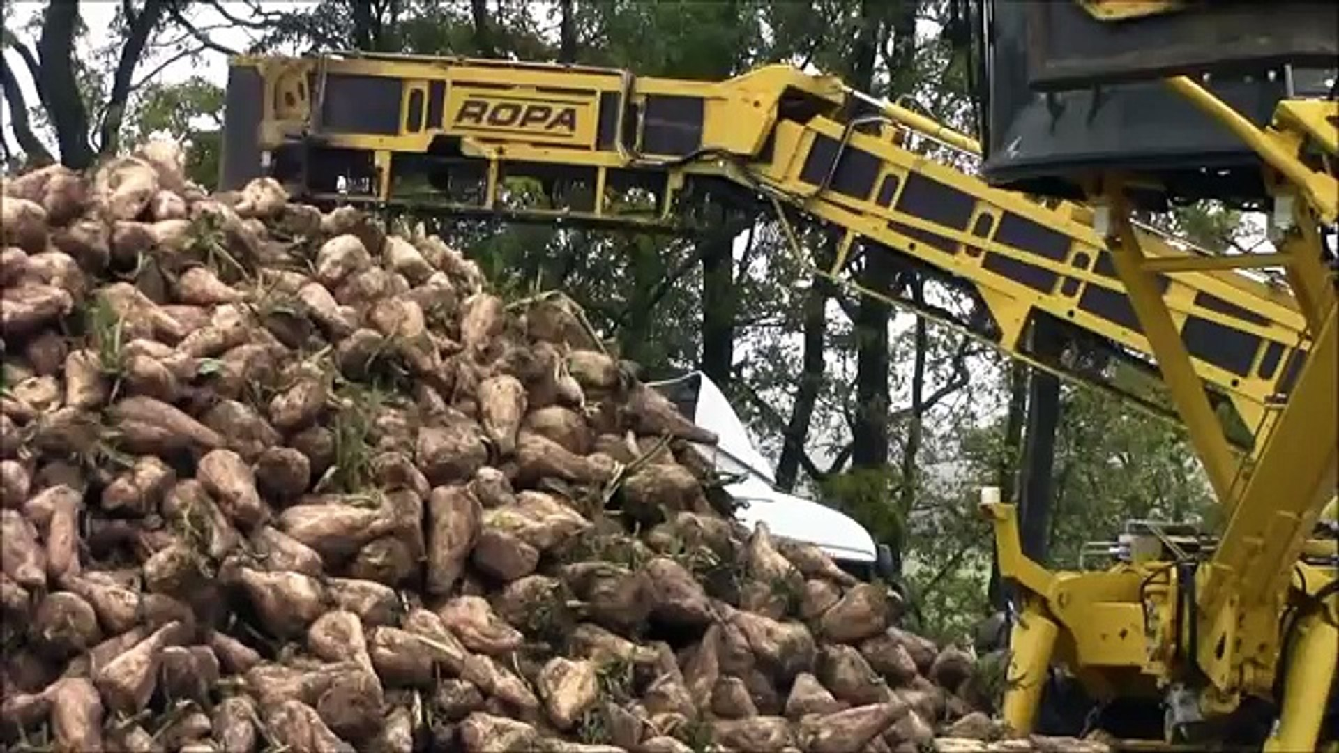 Ropa mouse loading sugar beet in 2012.wmv