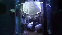 Passeriez-vous la nuit parmi 35 requins à l'Aquarium de Paris ?