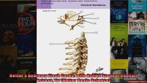 Netters Anatomy Flash Cards with Online Student Consult Access 4e Netter Basic Science