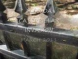 THOUSANDS & THOUSANDS OF CATERPILLARS EVERYWHERE - CATERPILLAR INVASION FLORIDA STYLE