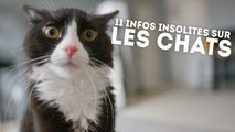 11 informations étonnantes sur nos amis les chats - QUI L'EÛT CRU ?