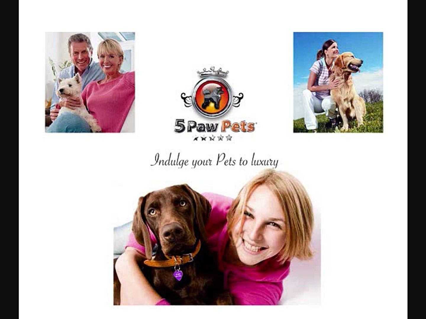 professional pet sitters in hollywood florida   florida  pet sitting    professsional pet care