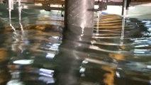 Diffraction de houle par un cylindre : essais à l'école centrale de Nantes