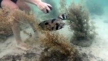 Ce plongeur téméraire sauve un poisson porc-épic piégé dans un filet. Mais ce qu'il voit juste à côté de lui est vraiment troublant !