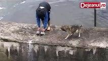 Salva un  cane che stava annegando, ma non si aspettava questo...