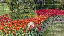 Tulip festival - Yelagin island, St.Petersburg Russia (80.000 tulips)