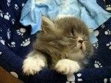 Sleepy, sleepy, sleepy...