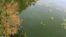 Domki na wodzie - Jezioro Jamno - video dailymotion