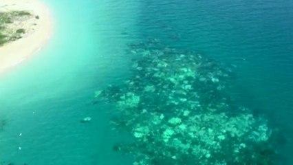 La Gran Barrera, víctima del blanqueo sus corales