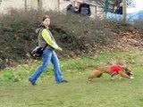 Coursing Arwen 29 3 2009