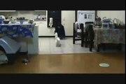 Keiko the Jack Russel Terrier