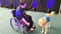 Handicap : rencontre avec Amélie et Ferdy de l'association Handi'chiens