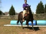 Carolina Sport Horses  Shortys Lil Image on Barrels