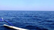 Dolphins chasing + amazing dolphins tricks in north Bali Sea - depart Lovina beach, Singaraja, Bali