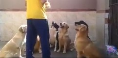 Dogs showing discipline while getting food