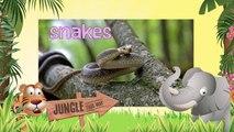 SNAKES | Serpientes- Animals for children. Kids videos. Kindergarten - Preschool learning