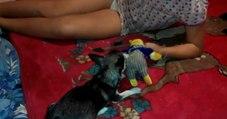 [Webcam From] Playing With My Cousin's Dog | Jugando con el perro de mi prima
